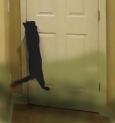 gatto apre la porta