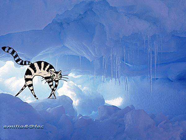 Gatto sul ghiaccio