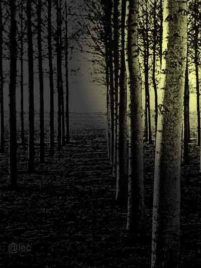 pioppi di notte