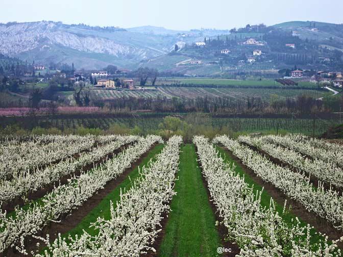 colline faentine